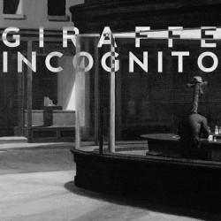 Giraffe Incognito – The Pursuit Continues